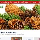 christmasforest_fb_cvr