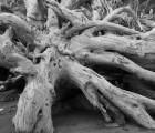 bw-stump2